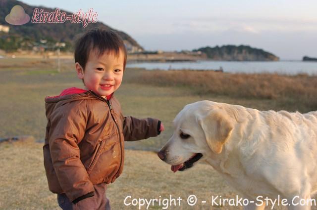 白い犬 子供